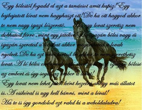 gyönyörű lovas idézetek Kezdőlap